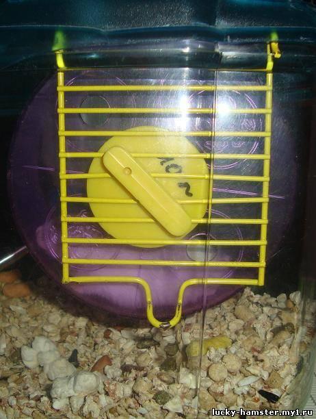 http://lucky-hamster.my1.ru/_fr/11/2352769.jpg