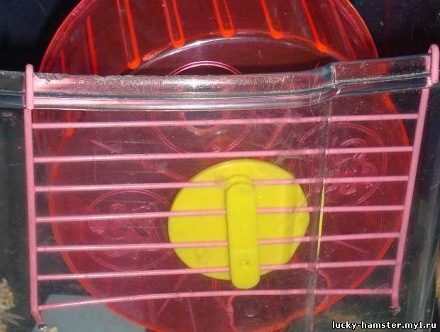 http://lucky-hamster.my1.ru/_fr/11/7037693.jpg