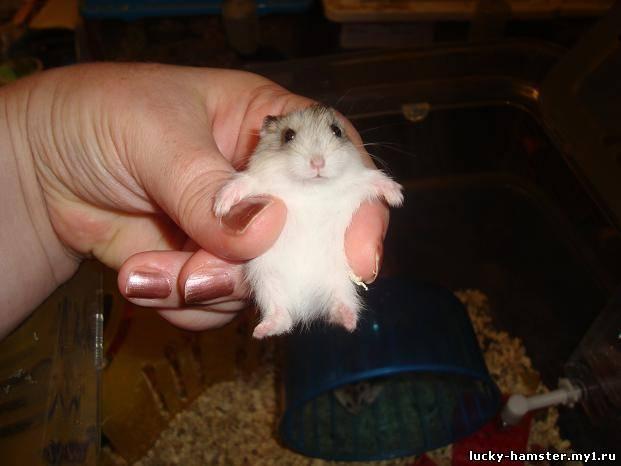 http://lucky-hamster.my1.ru/_fr/17/7316949.jpg