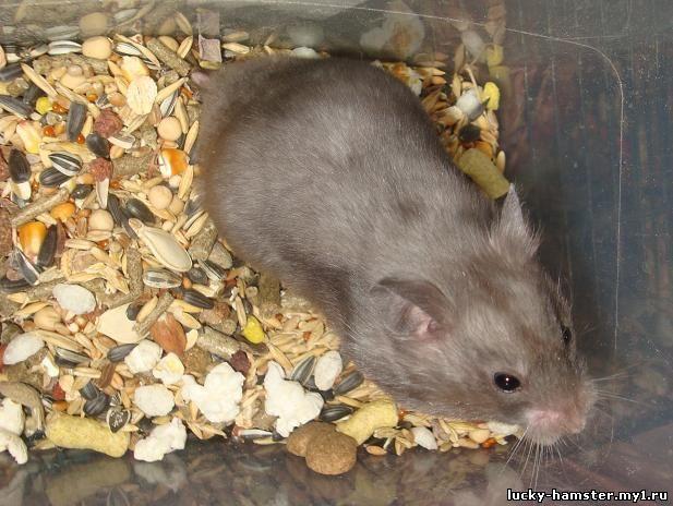 http://lucky-hamster.my1.ru/_fr/23/9541867.jpg