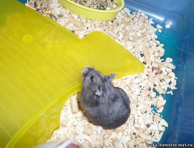 http://lucky-hamster.my1.ru/_fr/24/7020421.jpg