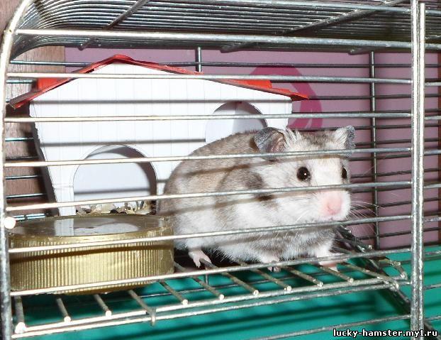 http://lucky-hamster.my1.ru/_fr/24/9899982.jpg