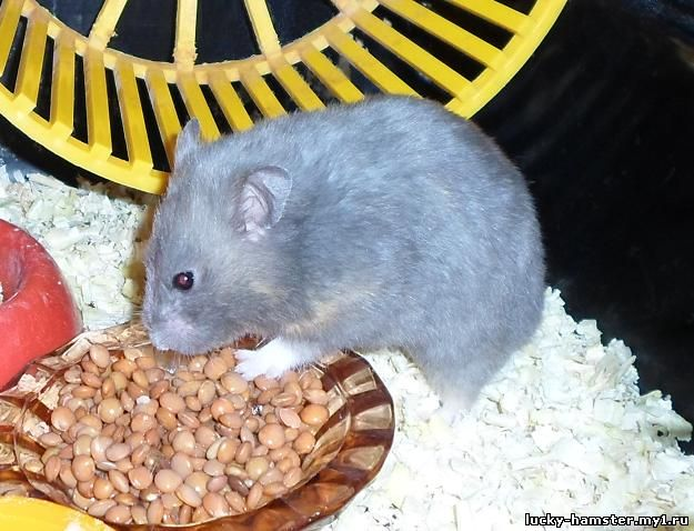 http://lucky-hamster.my1.ru/_fr/24/9930412.jpg