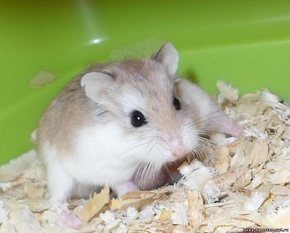 http://lucky-hamster.my1.ru/_fr/25/0243804.jpg