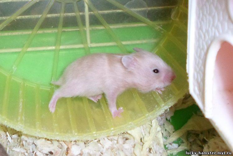 http://lucky-hamster.my1.ru/_fr/25/0732938.jpg