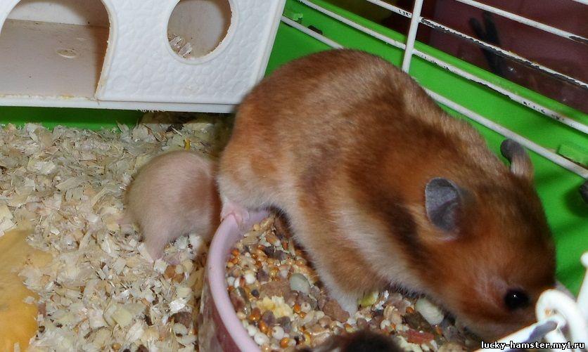 http://lucky-hamster.my1.ru/_fr/25/1805097.jpg