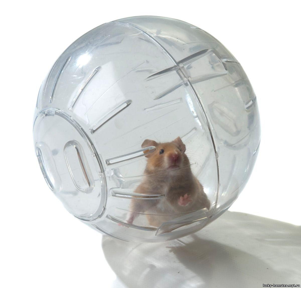 http://lucky-hamster.my1.ru/_fr/26/8045332.jpg