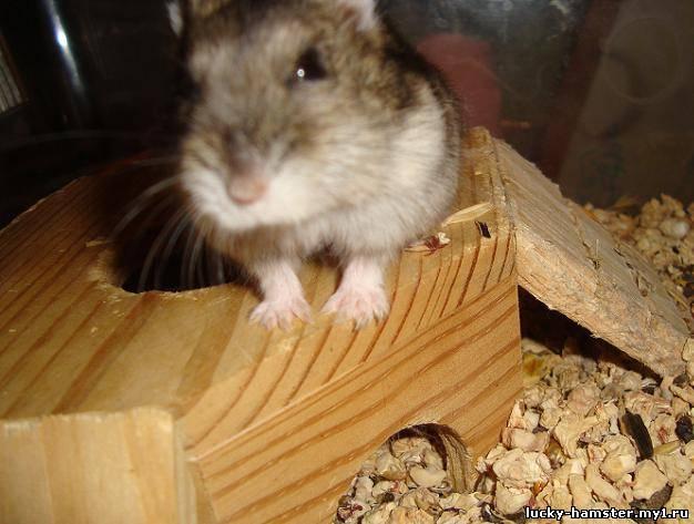 http://lucky-hamster.my1.ru/_fr/8/0258558.jpg