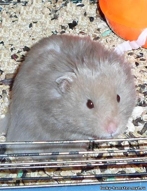 http://lucky-hamster.my1.ru/_fr/8/0438366.jpg