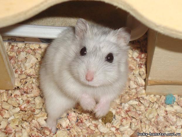 http://lucky-hamster.my1.ru/_fr/8/1044028.jpg