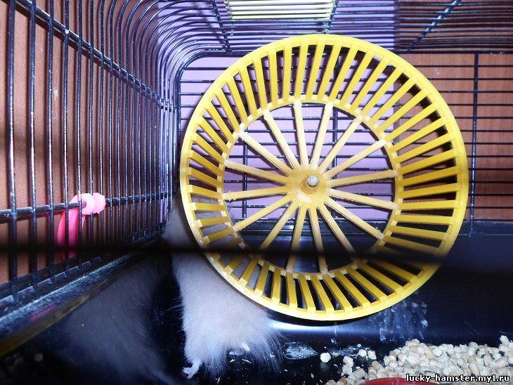 http://lucky-hamster.my1.ru/_fr/8/1355985.jpg