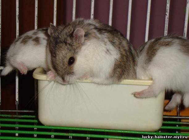 http://lucky-hamster.my1.ru/_fr/8/3895790.jpg