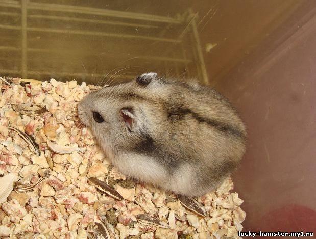 http://lucky-hamster.my1.ru/_fr/8/4263340.jpg