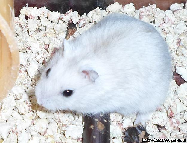 http://lucky-hamster.my1.ru/_fr/8/4450185.jpg