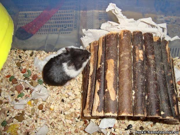 http://lucky-hamster.my1.ru/_fr/8/4719980.jpg