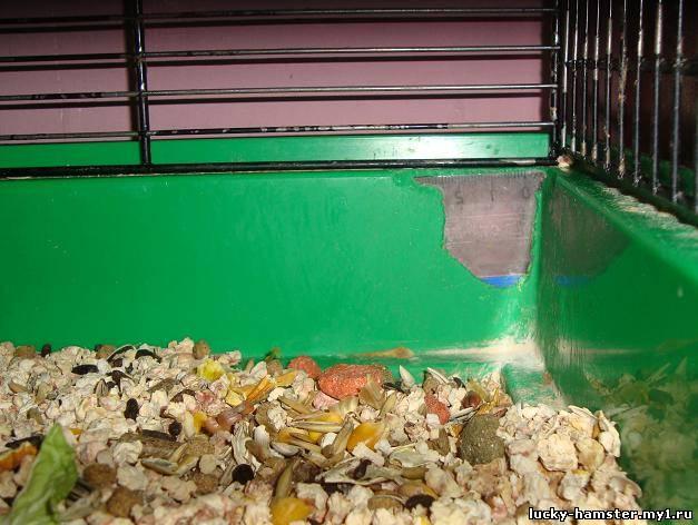 http://lucky-hamster.my1.ru/_fr/8/4797057.jpg