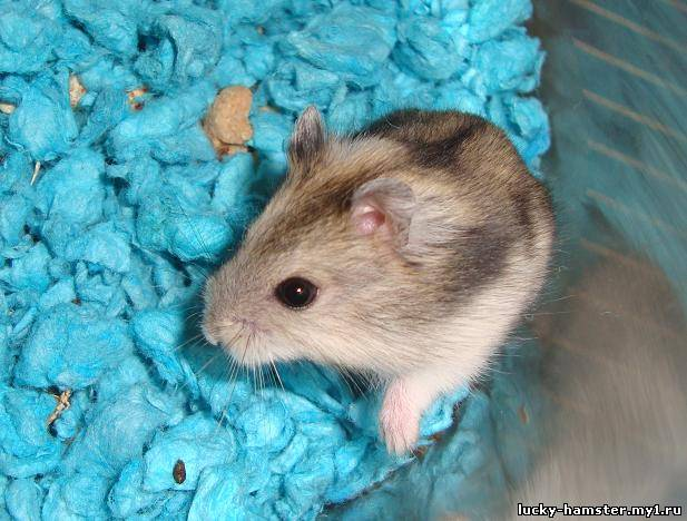 http://lucky-hamster.my1.ru/_fr/8/4802689.jpg