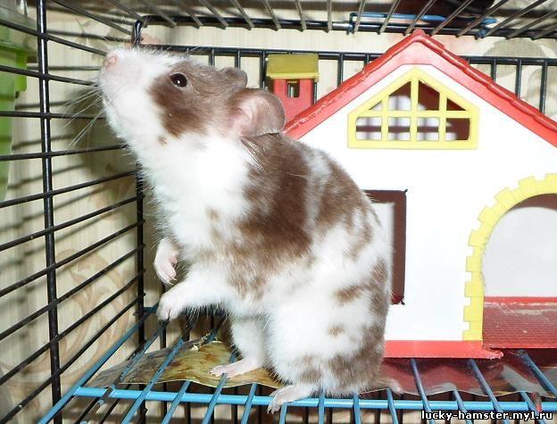 http://lucky-hamster.my1.ru/_fr/8/4973076.jpg