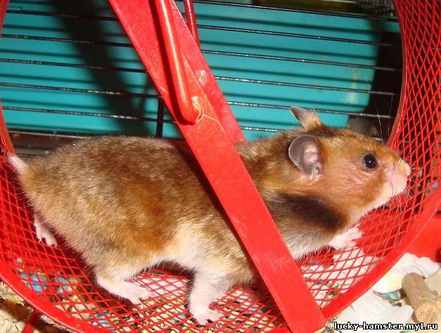 http://lucky-hamster.my1.ru/_fr/8/5655478.jpg