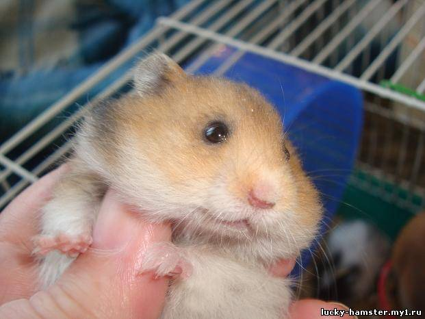 http://lucky-hamster.my1.ru/_fr/8/6282327.jpg