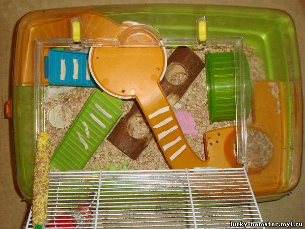 http://lucky-hamster.my1.ru/_fr/8/6656324.jpg