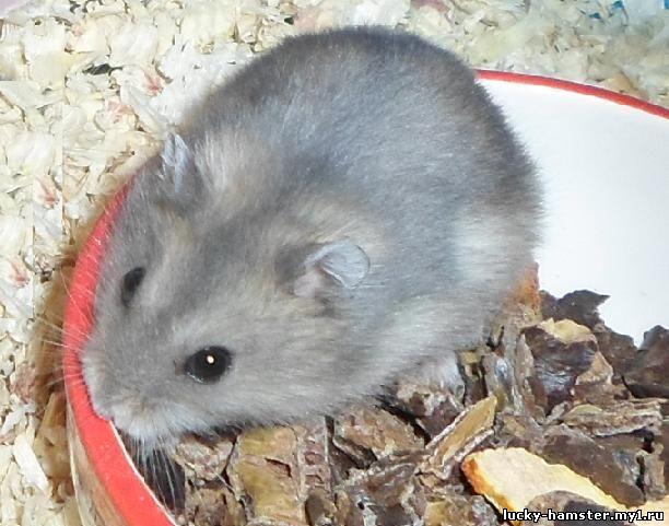 http://lucky-hamster.my1.ru/_fr/8/6670523.jpg