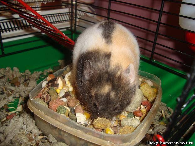 http://lucky-hamster.my1.ru/_fr/8/7113853.jpg