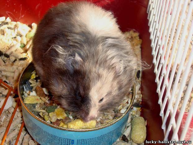 http://lucky-hamster.my1.ru/_fr/8/7219904.jpg