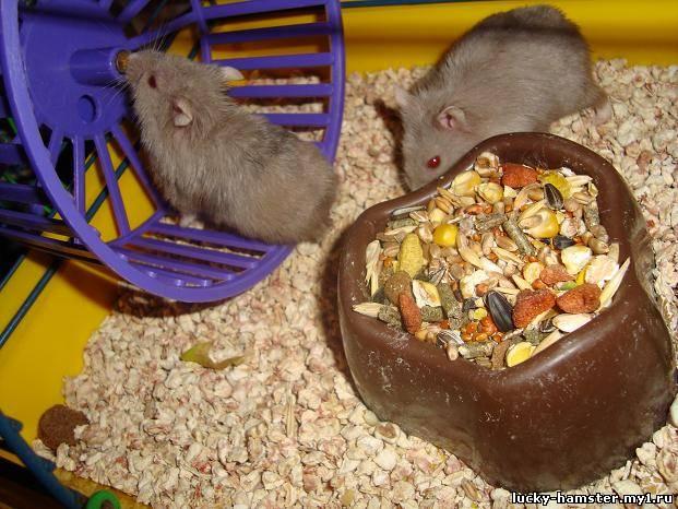 http://lucky-hamster.my1.ru/_fr/8/7240214.jpg