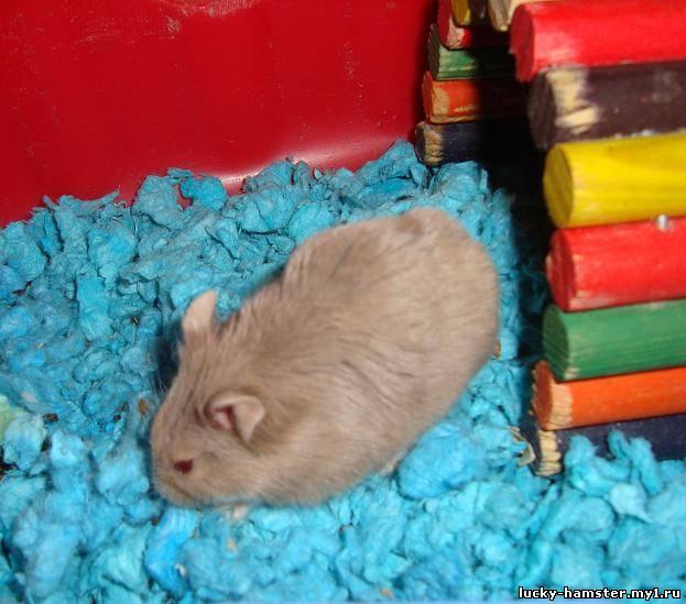 http://lucky-hamster.my1.ru/_fr/8/7465068.jpg