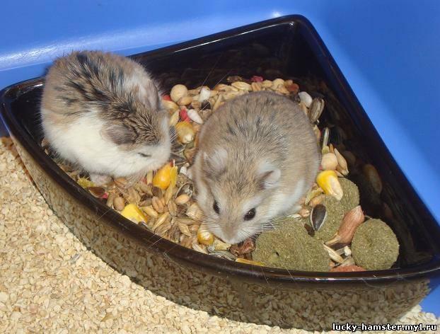 http://lucky-hamster.my1.ru/_fr/8/7573262.jpg