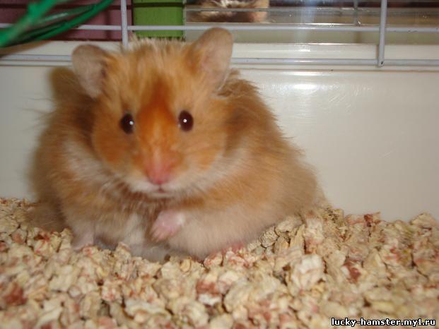 http://lucky-hamster.my1.ru/_fr/8/7700103.jpg