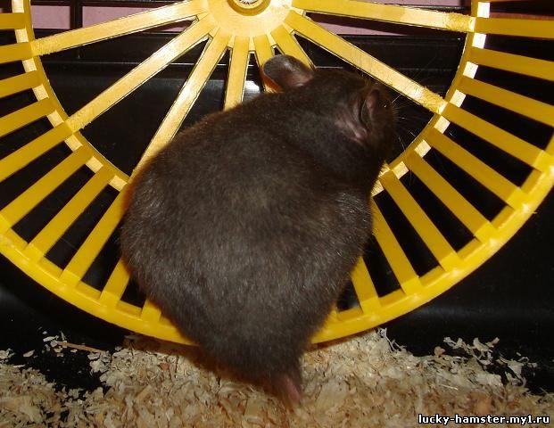 http://lucky-hamster.my1.ru/_fr/8/7869763.jpg