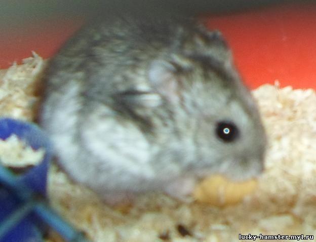 http://lucky-hamster.my1.ru/_fr/8/8166182.jpg