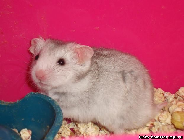http://lucky-hamster.my1.ru/_fr/8/8405403.jpg
