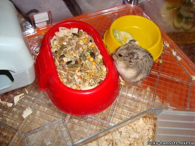 http://lucky-hamster.my1.ru/_fr/8/8791498.jpg