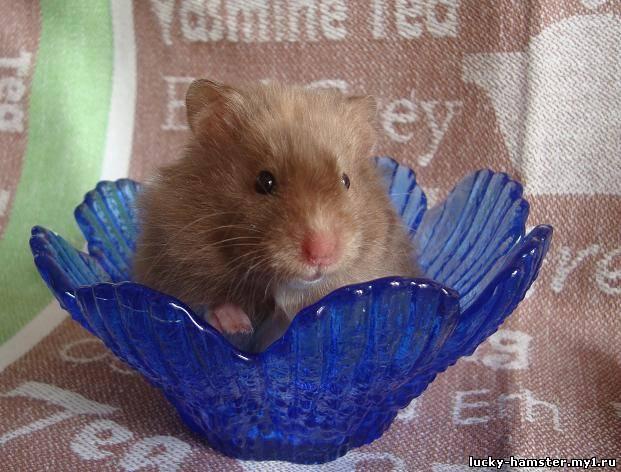 http://lucky-hamster.my1.ru/_fr/8/8859880.jpg