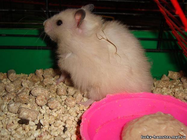 http://lucky-hamster.my1.ru/_fr/8/9256952.jpg