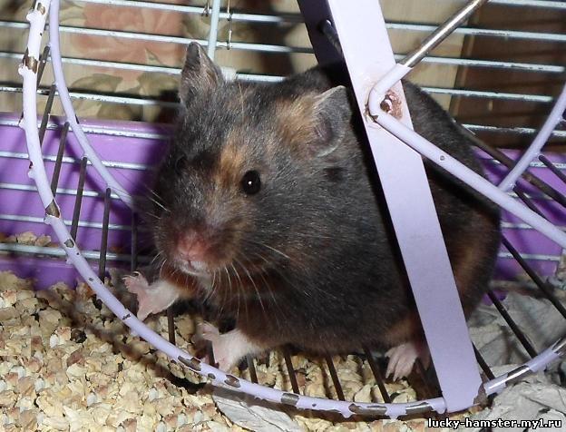 http://lucky-hamster.my1.ru/_fr/8/9670742.jpg