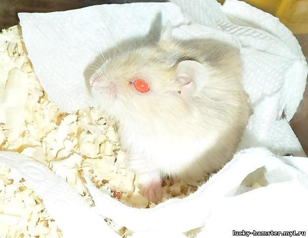 http://lucky-hamster.my1.ru/_fr/8/9699999.jpg