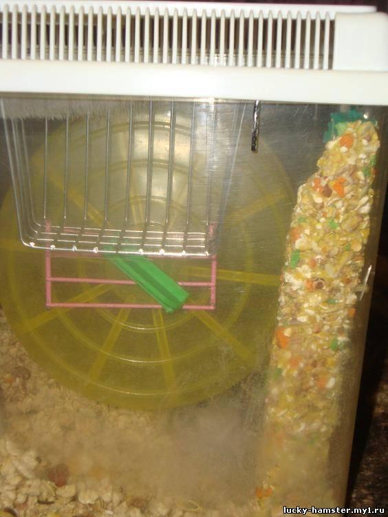 http://lucky-hamster.my1.ru/_fr/9/1942446.jpg